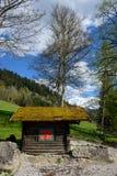 A paisagem idílico nos cumes com os prados verdes frescos e a montanha de florescência do flor e a snowcapped cobre no fotos de stock