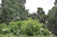 Paisagem imperial do jardim da Cidade Proibida do Pequim foto de stock royalty free