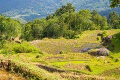 Paisagem impressionante das almofadas de arroz em Indonésia foto de stock royalty free