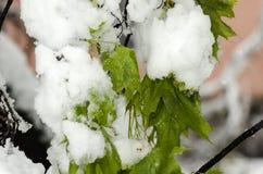 Paisagem incrível do inverno na primavera após a Páscoa Fotos de Stock