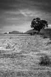 Paisagem indiana rural Imagem de Stock Royalty Free