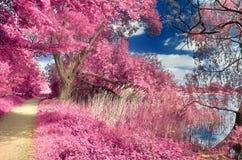 Paisagem infravermelha da fantasia bonita com as árvores em uma floresta e em campos e os lotes de elementos roxos e de um céu az fotografia de stock royalty free