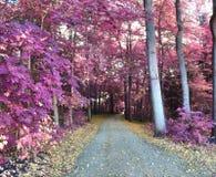 Paisagem infravermelha da fantasia bonita com lotes de elementos roxos e de um céu azul profundo foto de stock royalty free