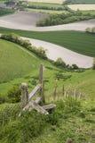 Paisagem inglesa de rolamento do campo na manhã da mola Fotografia de Stock