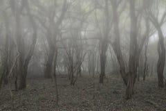 Paisagem inoperante assustador assustador da floresta de Dia das Bruxas com backgrou nevoento foto de stock