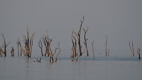 Paisagem inoperante da árvore Fotos de Stock Royalty Free