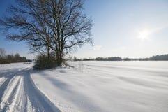 Paisagem invernal com sol Fotos de Stock Royalty Free