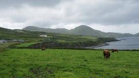 Paisagem irlandesa da costa Fotografia de Stock
