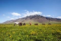 Paisagem islandêsa Foto de Stock Royalty Free