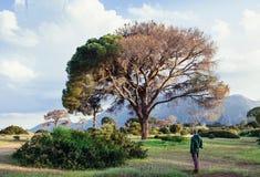Paisagem litoral com as árvores gigantes no sul de Turquia Fotos de Stock Royalty Free