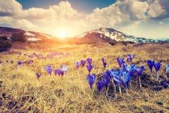 Paisagem mágica das montanhas Imagens de Stock Royalty Free