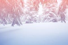 Paisagem mágica do inverno - floresta conífera coberto de neve Fotos de Stock