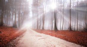 Paisagem místico dos raios de sol da estrada de floresta Fotografia de Stock