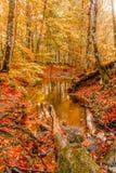 Paisagem macia do outono da vista, parque outonal, natureza da queda Foto de Stock Royalty Free