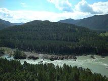 Paisagem magnífica com ramos, cedro de Altai da montanha nas montanhas do rio de Katun nos bancos fotografia de stock