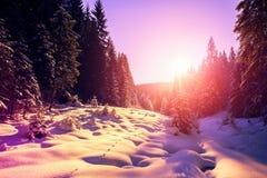 Paisagem majestosa do inverno pinheiro gelado sob a luz solar no por do sol Fotografia de Stock Royalty Free