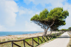 Paisagem marinha com árvore e fuga Imagens de Stock Royalty Free