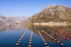 Paisagem mediterrânea bonita Exploração agrícola do mexilhão da cultura do Longline Montenegro, mar de adriático, baía de Kotor fotos de stock
