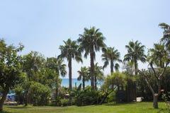 Paisagem mediterrânea Gramado verde com as palmeiras no hotel imagem de stock