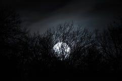 Paisagem misteriosa da noite nos tons frios - silhuetas dos ramos de árvore desencapados contra a Lua cheia e a noite nebulosa dr Imagem de Stock