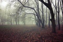 Paisagem misteriosa da queda - floresta nevoenta da queda com as árvores desencapadas da queda e as folhas vermelhas caídas da qu fotografia de stock