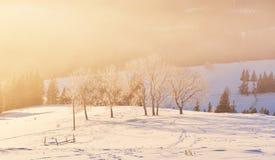 A paisagem misteriosa do inverno é montanhas majestosas no inverno Por do sol fantástico Cartão da cortesia da foto carpathians fotografia de stock royalty free