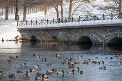 Paisagem na costa oeste, Suécia do inverno imagem de stock royalty free