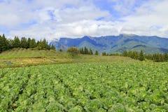 Paisagem na exploração agrícola de Fushoushan de Taiwan Fotos de Stock Royalty Free