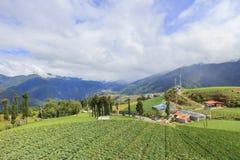 Paisagem na exploração agrícola de Fushoushan de Taiwan Imagem de Stock