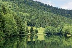 Paisagem na floresta de Thuringian Imagens de Stock