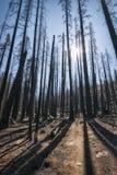 Paisagem na serra Nevada Mountains Imagens de Stock Royalty Free