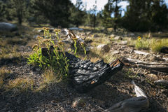 Paisagem na serra Nevada Mountains Fotografia de Stock Royalty Free