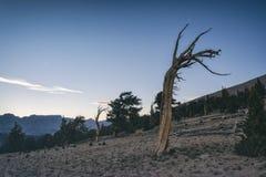 Paisagem na serra Nevada Mountains Fotografia de Stock