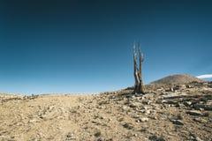 Paisagem na serra Nevada Mountains Imagens de Stock
