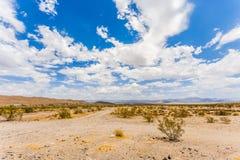 Paisagem nacional do deserto da conserva do Mojave Fotos de Stock Royalty Free