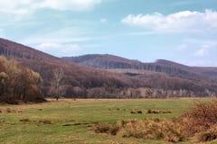 Paisagem nas montanhas Foto de Stock Royalty Free