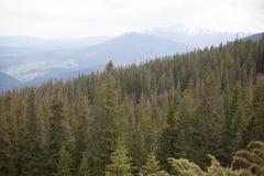 Paisagem nas montanhas Carpathians Ucrânia Imagem de Stock Royalty Free