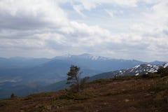Paisagem nas montanhas Carpathians Ucrânia Fotos de Stock