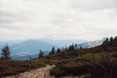 Paisagem nas montanhas Carpathians Ucrânia Imagem de Stock