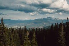 Paisagem nas montanhas Carpathians Ucrânia Fotografia de Stock Royalty Free