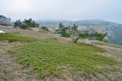 Paisagem nas montanhas com zimbro verde Fotos de Stock