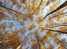 Paisagem natural bonita com uma vista de baixo nos troncos e fotos de stock