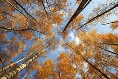 Paisagem natural bonita com uma vista de baixo nos troncos e imagens de stock royalty free