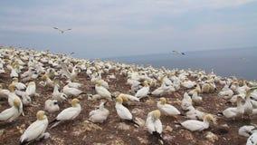 Paisagem natural de Matapedia da península de Gaspes video estoque