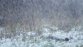 Paisagem natural do inverno natural