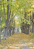 Paisagem natural Estrada na floresta do outono fotografia de stock