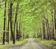Paisagem natural A estrada na floresta do verão imagem de stock royalty free