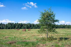 Paisagem natural europeia norte Imagens de Stock