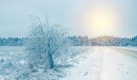 Paisagem nebulosa do inverno com a estrada asfaltada coberto de neve imagens de stock royalty free