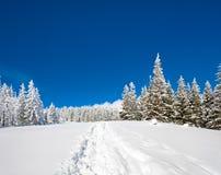Paisagem nevado Fotos de Stock Royalty Free